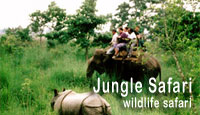 Jungle Safari in Nepal : Wildlife Safari